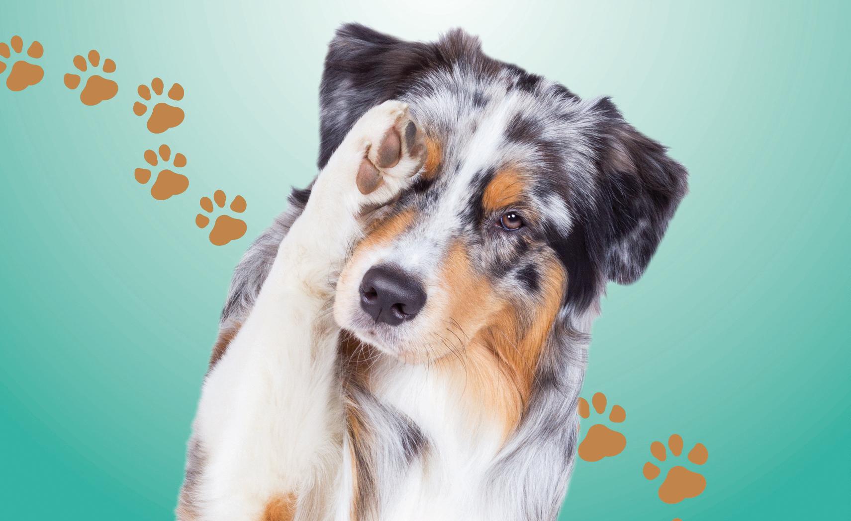 Ramassage des déjections canines