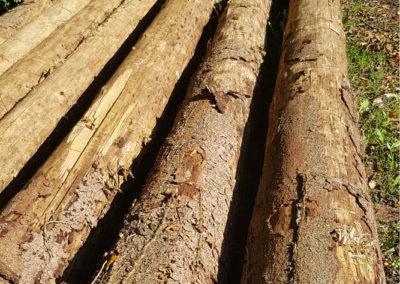 Détails bois atteints