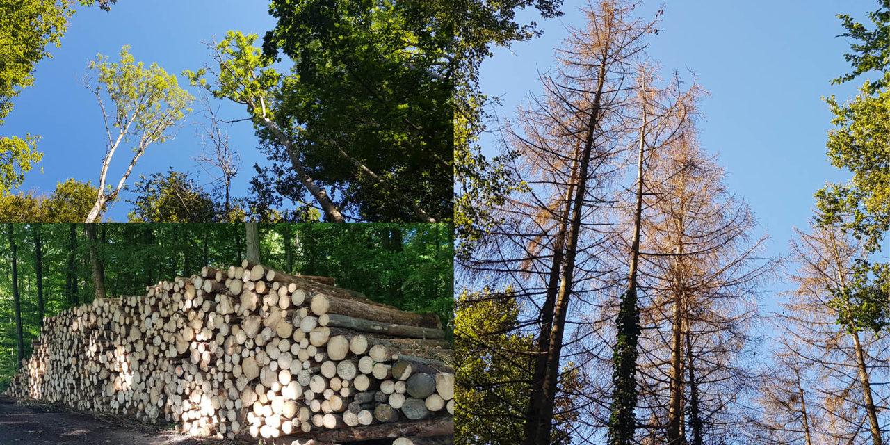 Canicule, sécheresse, hiver doux : zoom sur la santé de notre forêt