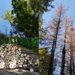 Forêt du Vita : interventions & projets