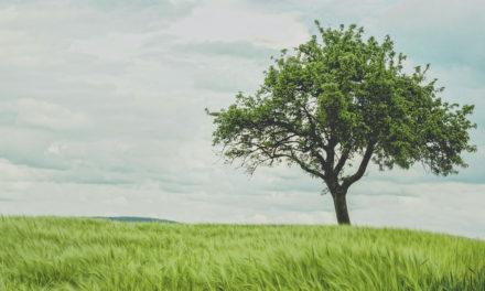 Commande groupée : fruitiers & arbustes