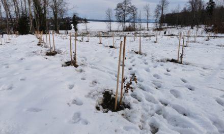 Protégé: Hauteur du Burgerwald, une plantation pour l'avenir